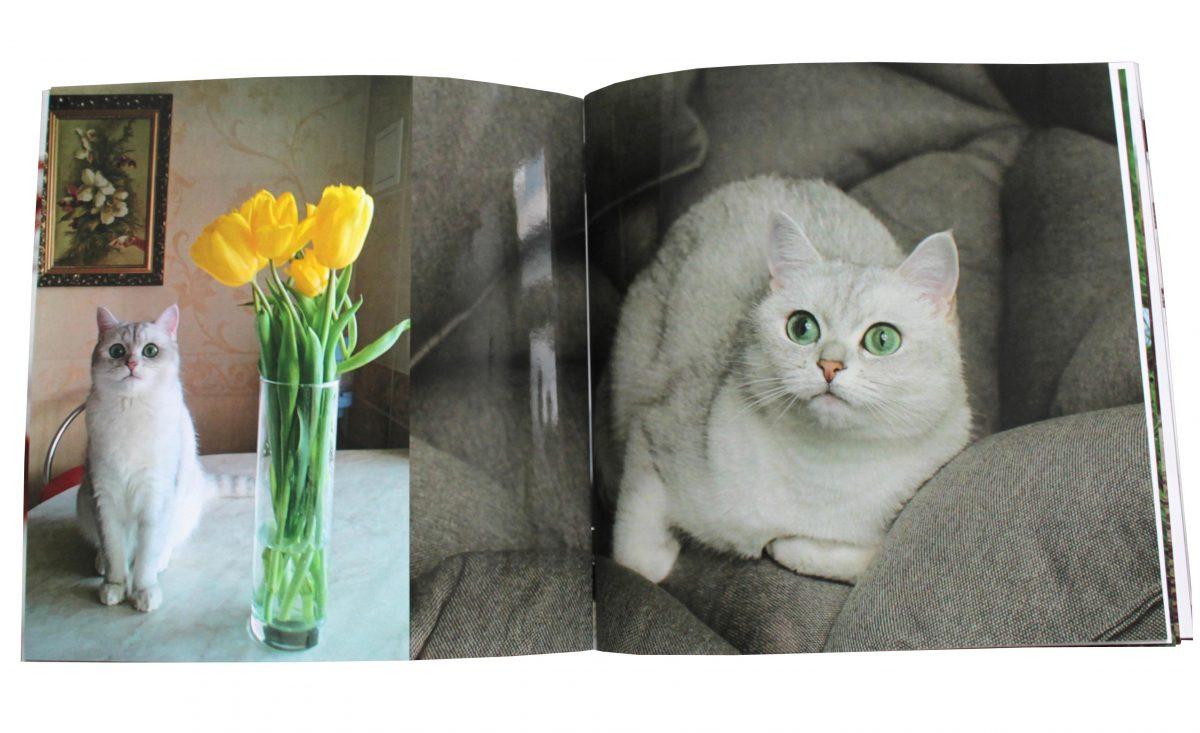 Заказать фотожурнал - полная запечатка страниц - печать фотографий Букфоми